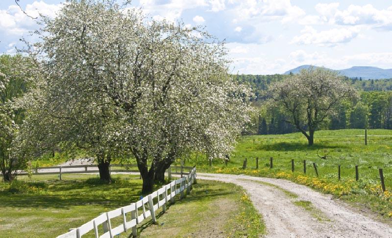 Spring in Stowe